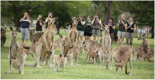 туристы и кенгуру