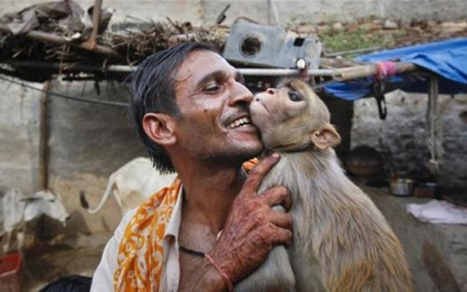 обезьяна и человек