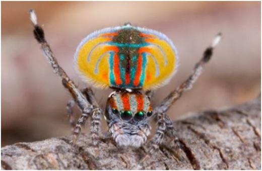 красивый паук фото