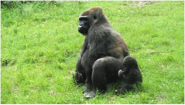 обезьяна с детенышем картинка